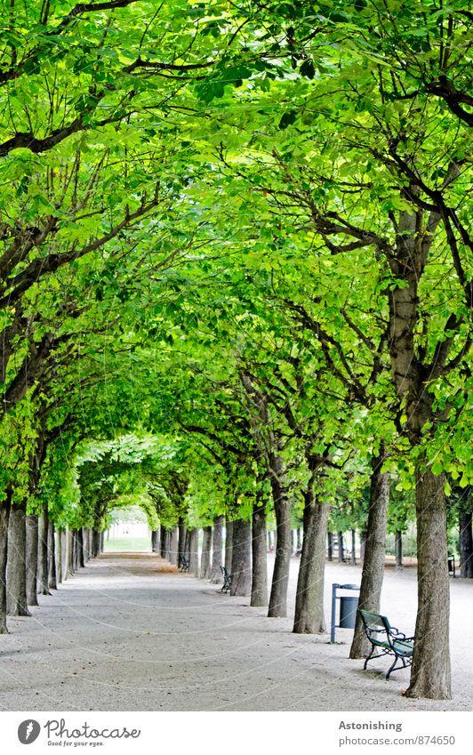 natürlich-künstlicher Tunnel Garten Dekoration & Verzierung Kunst Natur Pflanze Sommer Schönes Wetter Baum Park Wien Straße Wege & Pfade stehen alt Kitsch grau