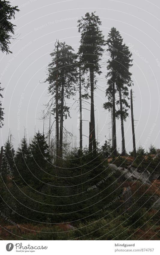 The Three Tree(s) Himmel Natur Ferien & Urlaub & Reisen alt Pflanze Sommer Baum Landschaft dunkel Wald schwarz Berge u. Gebirge Umwelt Holz grau Stein