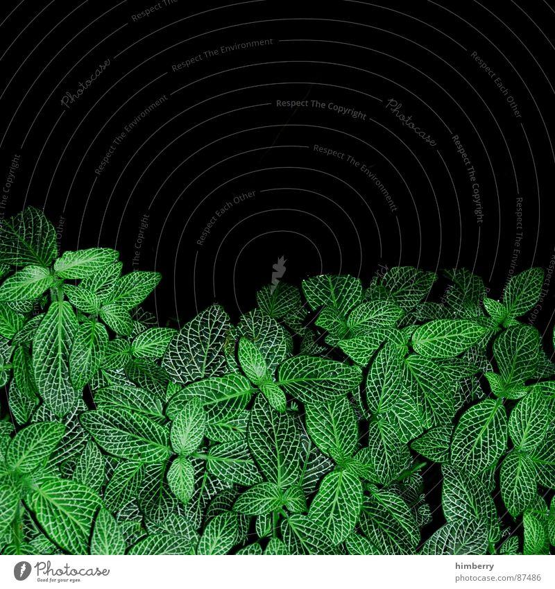 leaf me in the dark Natur grün Blatt dunkel Frühling Garten Park Umwelt Aktien Wildnis Dachterrasse Dachgarten