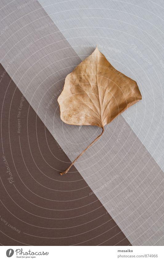 Herbstblatt Leben Freizeit & Hobby Herbstlaub Erntedankfest Umwelt Natur Pflanze Baum Blatt alt braun gelb grau ästhetisch elegant Ende graphisch Geometrie