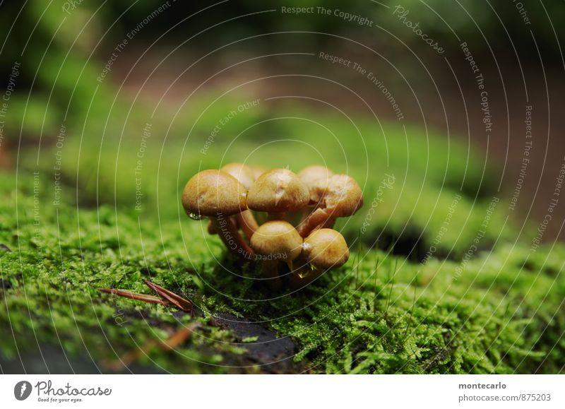 auslaufmodell | die letzten... Umwelt Natur Herbst Pflanze Moos Grünpflanze Nutzpflanze Wildpflanze Pilz Baumstumpf Wald dünn authentisch einfach kaputt klein