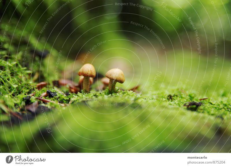 in den tiefen des waldes Natur Pflanze grün Umwelt Herbst natürlich klein braun Erde wild Sträucher authentisch wandern einfach weich rund