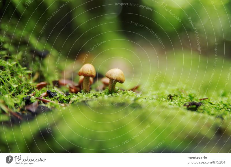 in den tiefen des waldes Umwelt Natur Erde Herbst Pflanze Sträucher Moos Grünpflanze Wildpflanze Pilz Waldboden entdecken wandern dünn authentisch einfach klein
