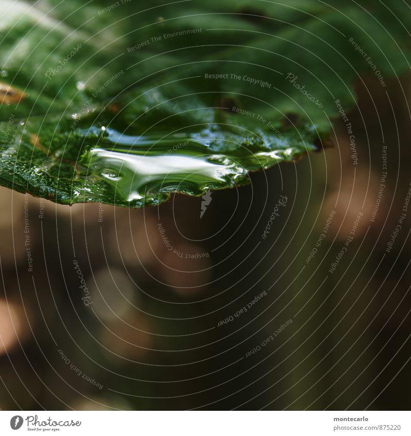 glänzend Umwelt Natur Pflanze Wassertropfen Blatt Grünpflanze Wildpflanze dünn authentisch einfach frisch nah nass natürlich weich braun grün Farbfoto