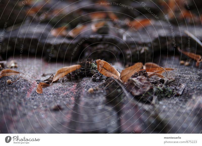 kreuzweise | liegen sie da Umwelt Natur Herbst Pflanze Moos Blatt Grünpflanze Wildpflanze Dachziegel Stein alt dünn kalt klein natürlich trist trocken braun