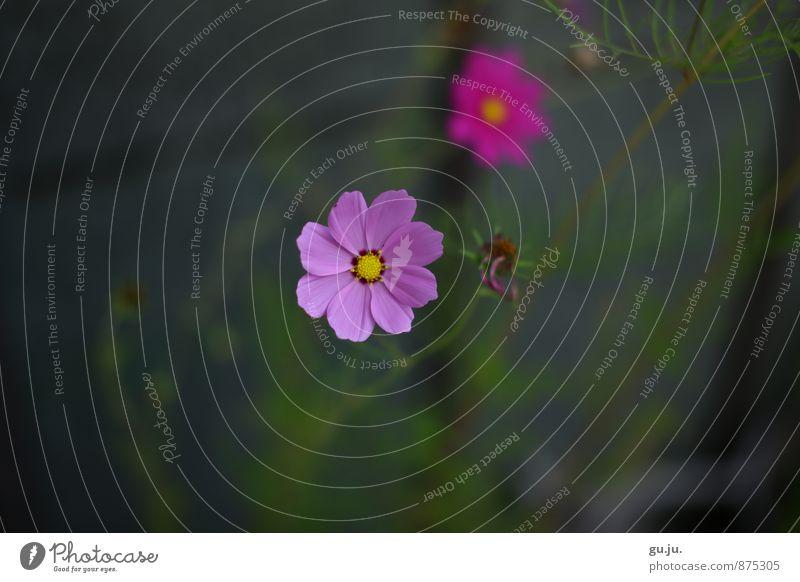 blumiges Bokeh Natur Pflanze schön grün Umwelt Wand Leben Blüte Mauer grau Garten rosa Park Wachstum trist ästhetisch