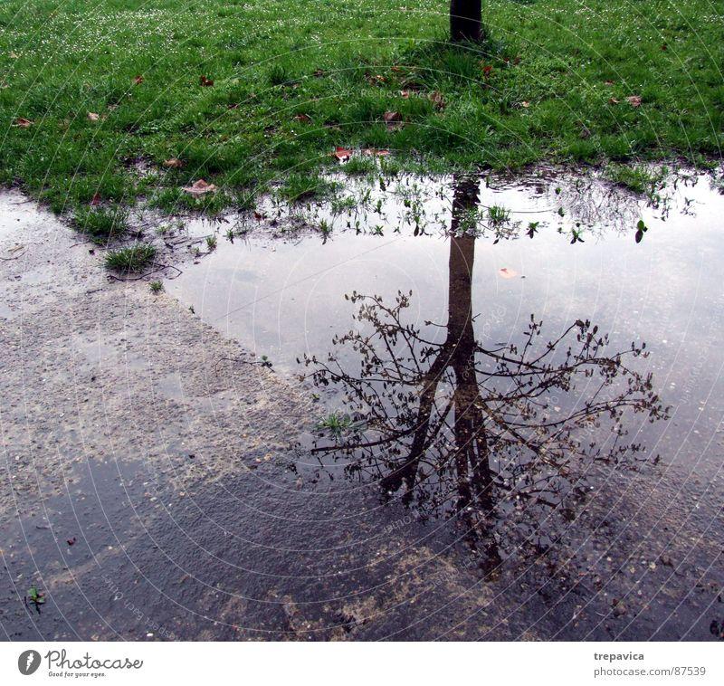baum und wasser Baum grün Pflanze Straße Leben Herbst Gras Frühling Traurigkeit Regen Stimmung Wetter nass Fluss Bodenbelag Asphalt