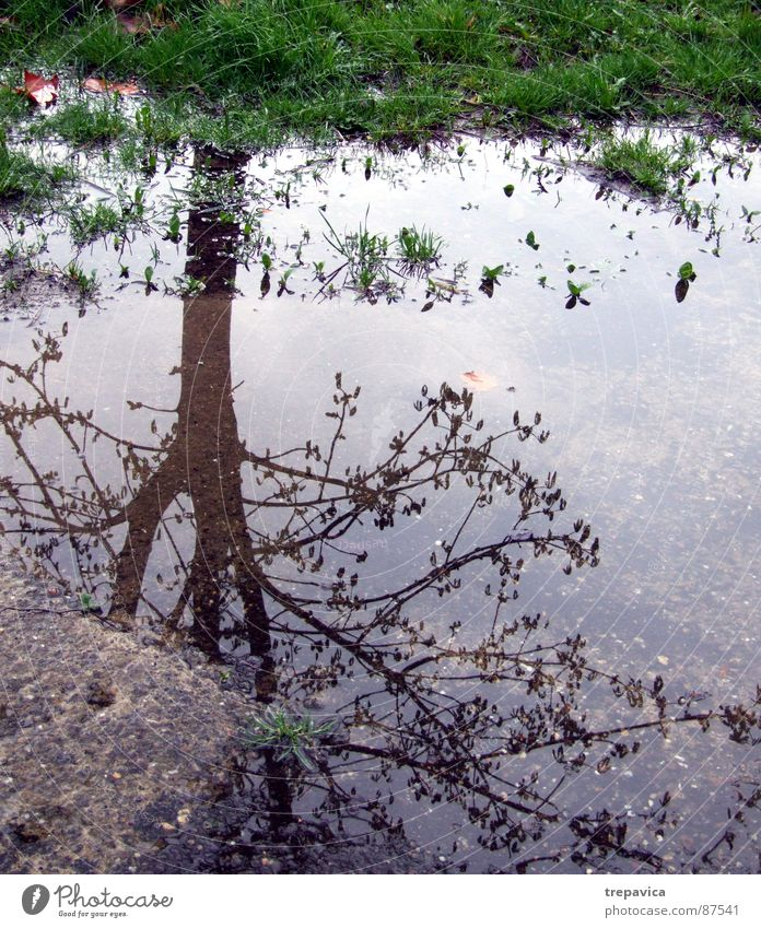 wasser und baum Baum Gras Spiegel Asphalt grün Herbst Stimmung nass ungemütlich Frühling 1 Regen Pflanze water mirror mood Zweig regenrest Wetter reflektion