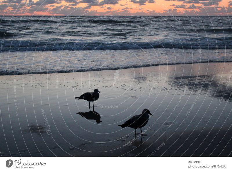 Warten auf die Flut II Himmel Natur Ferien & Urlaub & Reisen blau Wasser ruhig Wolken Tier Strand Umwelt Küste Freiheit Sand Stimmung Vogel Luft