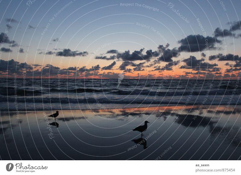 Warten auf die Flut Himmel Natur blau Wasser Meer Landschaft ruhig Wolken Tier Umwelt Küste Sand Horizont Luft Wetter orange