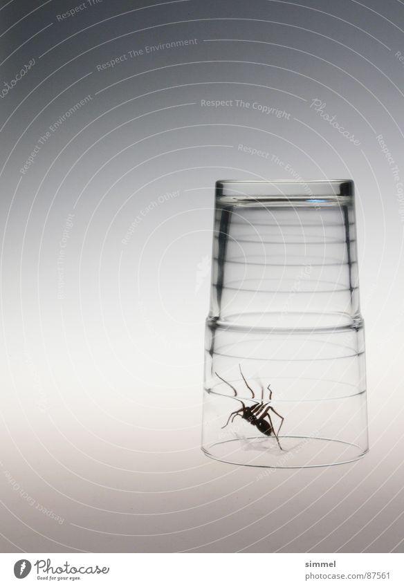 Glas-Gefängnis I Spinne grau Ekel bedrohlich eng durchsichtig krabbeln gefährlich Tier Alptraum Biest bedrängen steril Panik Gift fatal Angst Vergänglichkeit