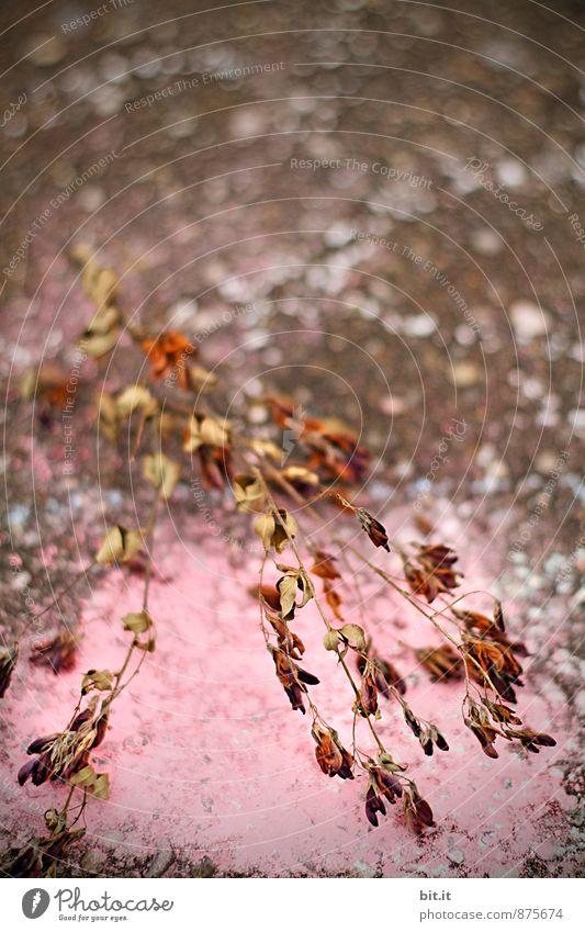 leichtes Wirr-warr Design Freude Spielen Basteln Kindererziehung Kindergarten Kunst Kunstwerk Natur Herbst Pflanze Kitsch Krimskrams trashig Leben Stress bizarr