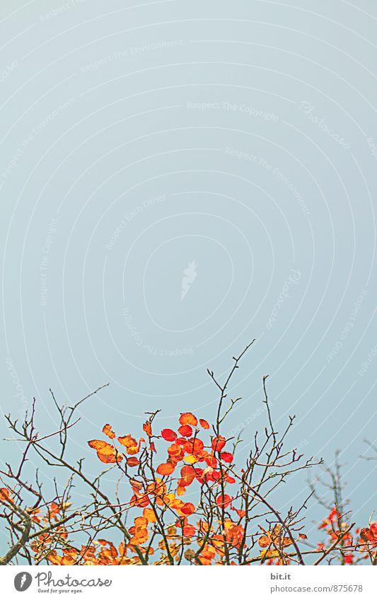 kahles Leuchten Erholung ruhig Ferien & Urlaub & Reisen Ferne Freiheit Garten Natur Himmel Herbst Schönes Wetter Pflanze Sträucher Dekoration & Verzierung blau