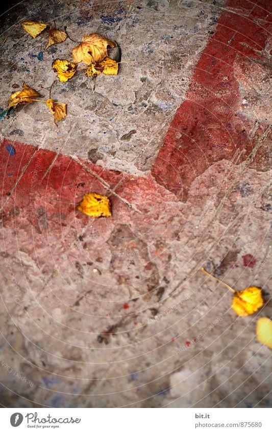 ins Eck getrieben Pflanze Blatt Wand Traurigkeit Graffiti Farbstoff Herbst Wege & Pfade Mauer Stein Linie trist Design Schilder & Markierungen Beton Platz