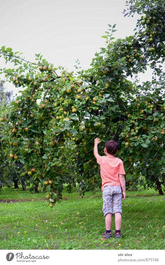 Erntedank Mensch Himmel Kind Natur Baum Gesunde Ernährung Gras Junge natürlich Glück Gesundheit Garten Zufriedenheit frisch Lebensfreude