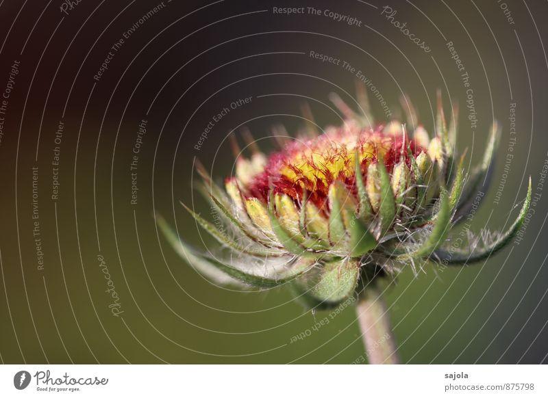 verblüht im abendlicht Umwelt Natur Pflanze Sommer Blume Blüte Garten stehen ästhetisch Vergänglichkeit schön Farbfoto mehrfarbig Außenaufnahme Menschenleer