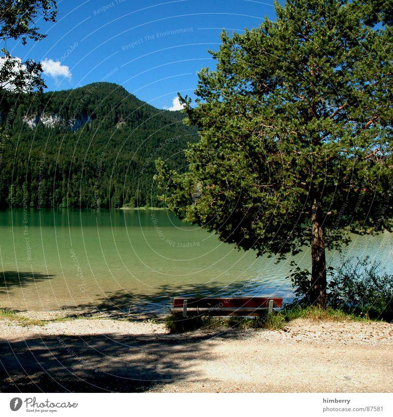 riviera royal VIII See Gras Sommer Naturgesetz grün Umwelt Wolken Wildnis Himmel Berge u. Gebirge Landschaft Pflanze Firmament