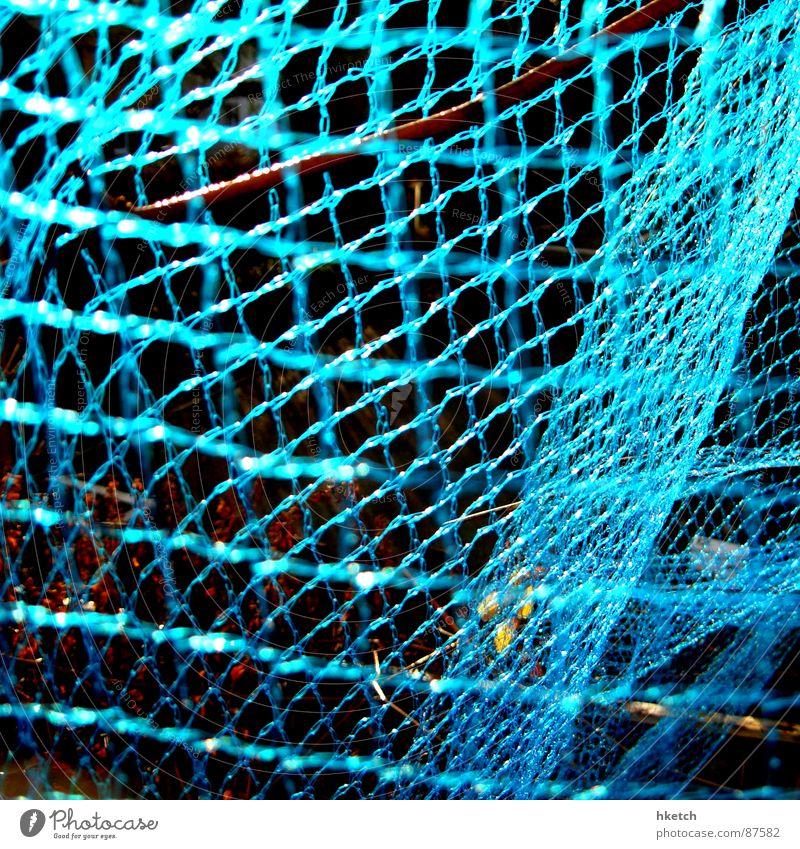 Ins Netz gegangen geschlossen Netz obskur Neonlicht durcheinander Vernetzung Spinnennetz Spinngewebe verwickelt abgeschirmt verwickeln