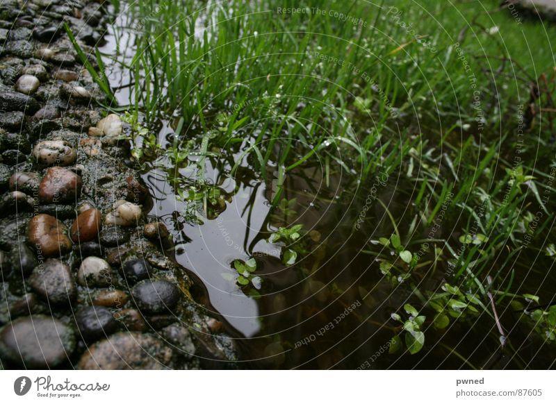 Feuchtbiotop Wasser grün Gras Stein Regen nass Rasen Fluss feucht Bach Grasland gießen Kieselsteine Grasnarbe Riff Miniatur