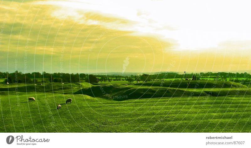 schäfchen zählen? Himmel Natur Pflanze grün schön Sonne Landschaft ruhig Wolken Tier Berge u. Gebirge Umwelt gelb Frühling Wiese Gras