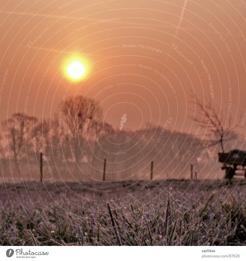 Bodenfrost Gefühle Frühling Wiese Schnee Gras Klima Hoffnung Frost Zaun Weide Grenze Tau frieren Fortschritt verbinden unklar