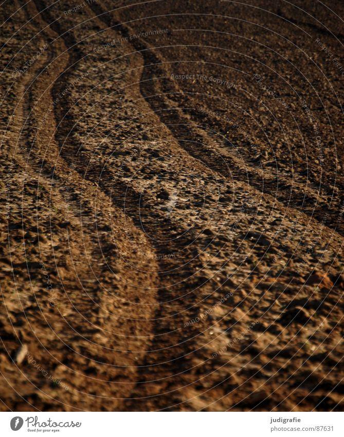 Acker Feld Wachstum Landwirtschaft braun pflügen Ackerbau Auftrag Erde Wiese Fußspur Sand Bodenbelag anbauen Linie bauerngut Humus wachsen lassen mutterboden