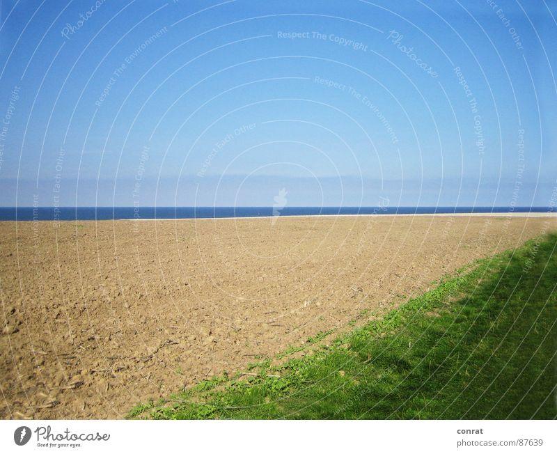 Horizonte - Spätsommer an der Ostsee Himmel Meer Sommer Strand Ferne Wiese Feld Küste