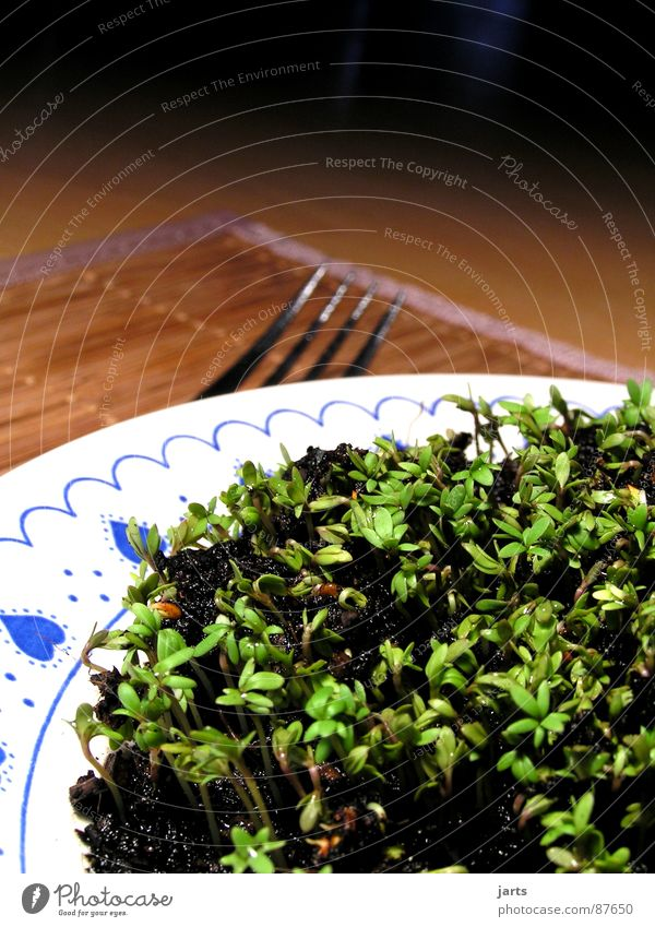 Vegetarisch II grün Leben Gesundheit Kräuter & Gewürze Gemüse lecker Teller Mahlzeit Vitamin Besteck Gabel pflanzlich Vegetarische Ernährung Kresse