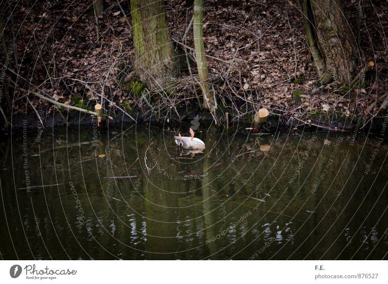 Alle meine Entchen Natur Wasser See Tier Ente Totes Tier 1 gruselig trashig braun grün Traurigkeit Tod Trauer Umweltkatastrophe Umweltschutz Gedeckte Farben