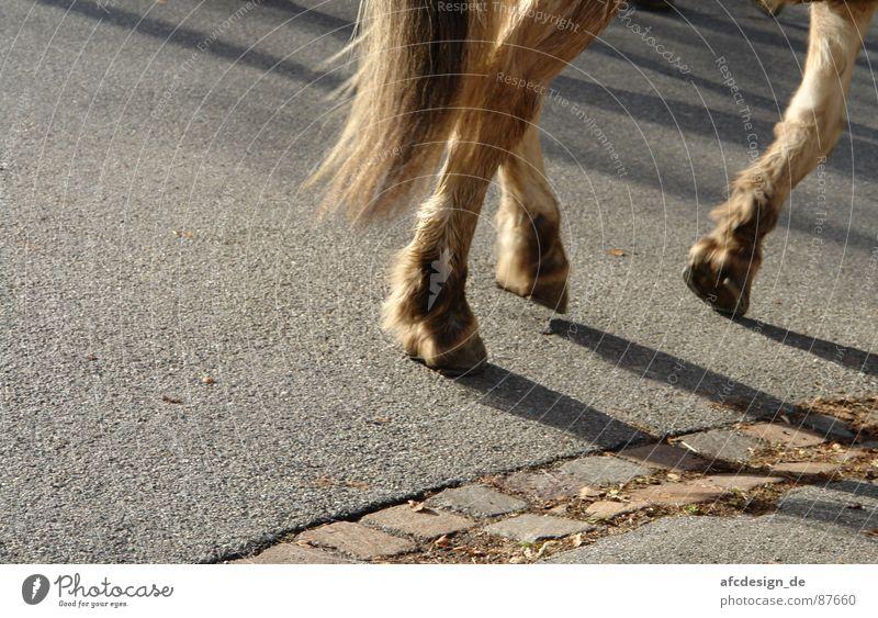 Runaway Horses Pferd Huf Asphalt Tier Fell Schwanz Straße Anschitt Schatten