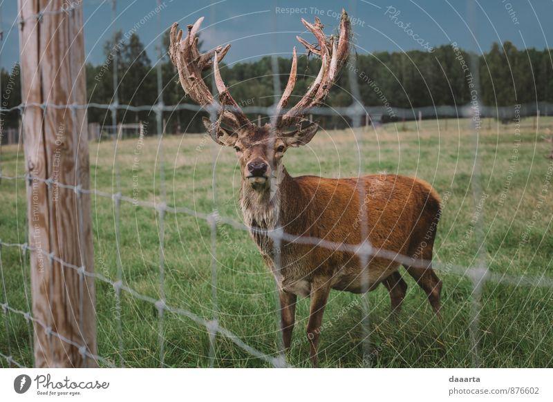 Natur Ferien & Urlaub & Reisen Erholung Tier Freude Wald Leben Stil Spielen Lifestyle Freiheit Design Park Tourismus wild Feld