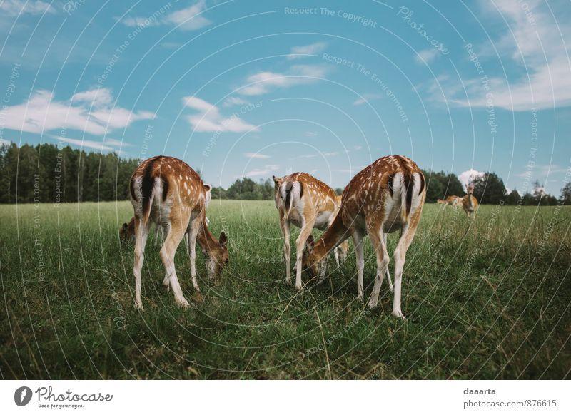 Himmel schön Sommer Freude Tier Gras Glück Freiheit Essen Gesundheit außergewöhnlich Freizeit & Hobby Lifestyle Wildtier Tourismus verrückt