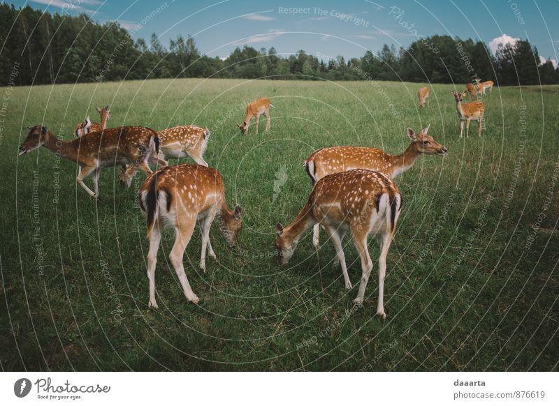 Natur Ferien & Urlaub & Reisen Landschaft Freude Tier Umwelt Leben Gras Gesundheit Freiheit Lifestyle Stimmung wild Freizeit & Hobby Wildtier Fröhlichkeit