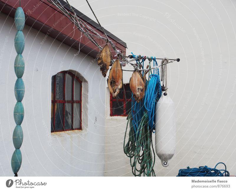 Fische, Seile, Boje zum trocknen aufgehängt Ernährung Angeln Totes Tier lecker blau braun grün weiß Vorfreude Appetit & Hunger Farbfoto Außenaufnahme