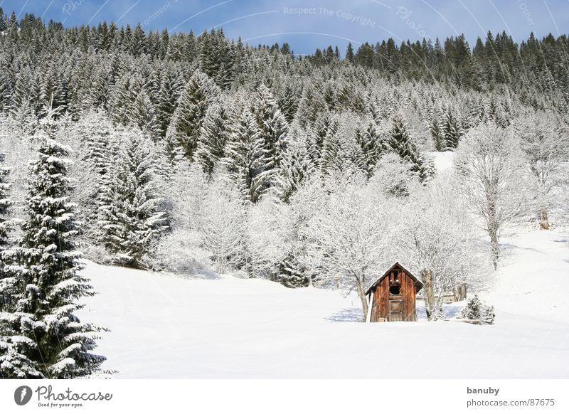 echter winter Einsamkeit kalt Berge u. Gebirge Tanne Bauernhof Schneehütte abgelegen zurückziehen Winter Himmel snow Hütte Menschenleer