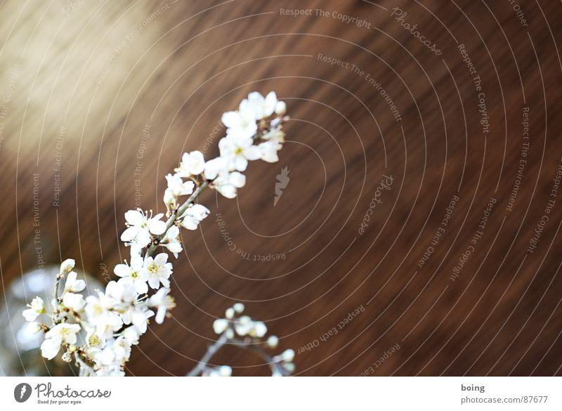 montags: DADA mit Larissa und Liudger Weissdorn Gartenarbeit Sträucher Frühlingsgefühle Schwarzdorn Blütenknospen Blattknospe Blühend Geruch Duft Vase Gesteck