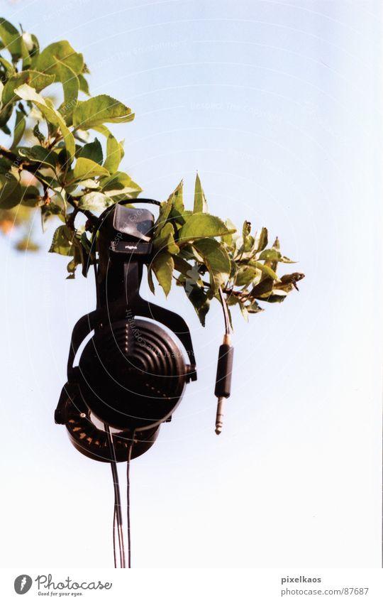 phone tree Kopfhörer grün Blatt schwarz glänzend Frühling Außenaufnahme Himmel