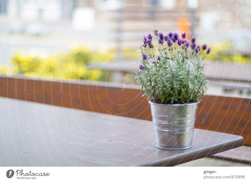 Köln UT | Mülheim Carlswerk | En Blömche Pflanze Sommer Blume braun gelb grün violett Blumentopf Tisch Bank hell Metall Dekoration & Verzierung Unschärfe Blüte