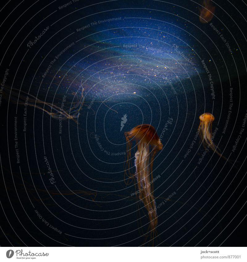 unterm Spiegel exotisch Wasser Qualle Aquarium Tier tauchen glänzend maritim Zusammensein Gelassenheit Leben einzigartig Leichtigkeit Perspektive träumen Zeit