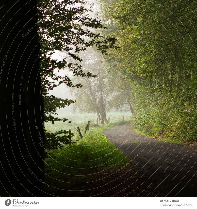 Ausfahrt Umwelt Natur Landschaft Pflanze Baum Gras Sträucher Feld Wald dunkel braun grau grün schwarz Stimmung Bogen Kurve Aussicht Nebelschleier Dunst Farbfoto