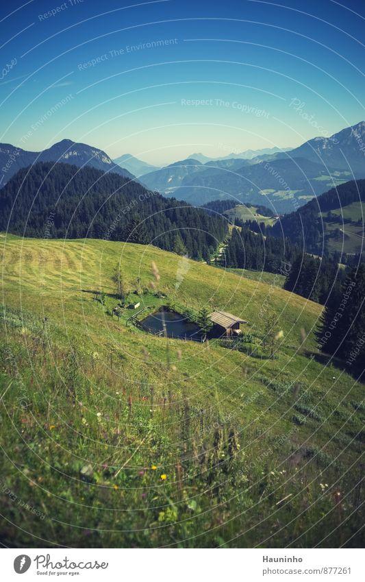 Fischweiher in den Bergen Himmel Natur Ferien & Urlaub & Reisen blau Pflanze grün Sommer Baum Einsamkeit Erholung Blume Landschaft Wald Umwelt Berge u. Gebirge Wiese