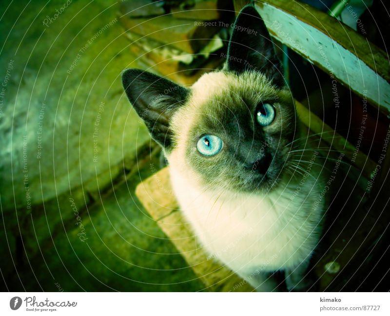 Social Cat Säugetier Mexiko Tier Holzmehl Cross Processing expressiv