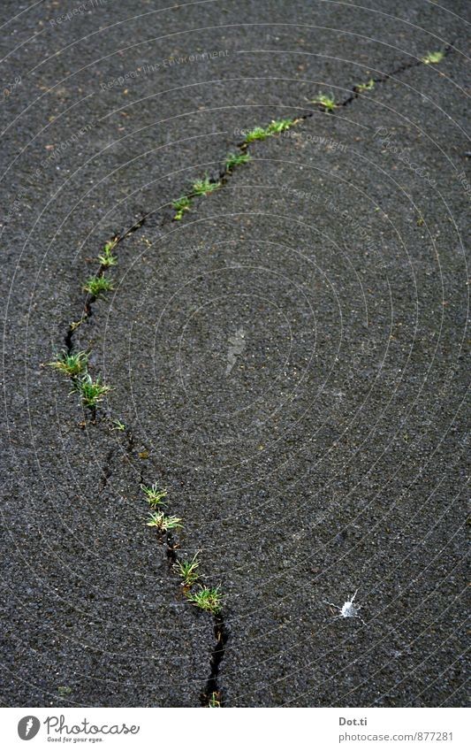 Natur ist überall schön Verkehrswege Straße grau grün Kraft Zerstörung Riss Gras Spalte Besiedelung Asphalt Bruch verfallen Straßenschäden Infrastruktur