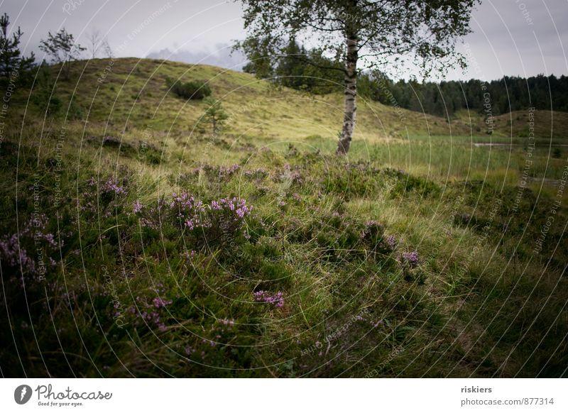 wilde schönheit Umwelt Natur Landschaft Pflanze Sommer Herbst Wetter Regen Baum Moos Wildpflanze Heidekrautgewächse Wiese Wald Hügel Berge u. Gebirge natürlich