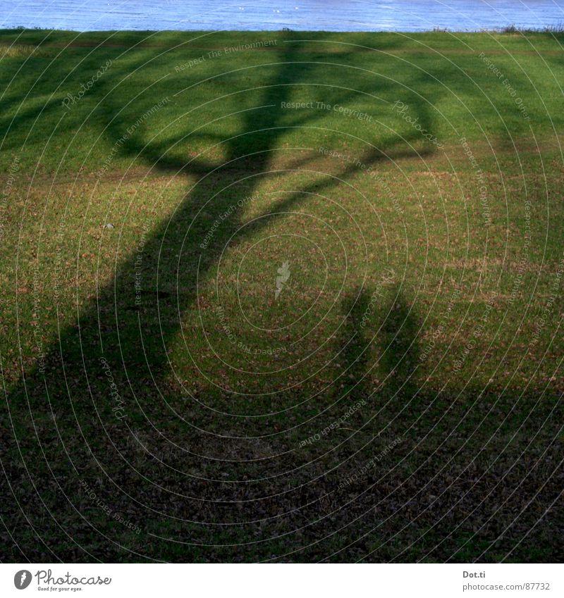 Scheinriesen Paar 2 Mensch Natur Herbst Baum Gras Wiese Seeufer Flussufer Zusammensein grün Polder Flußauen Deich Rhein paarweise Farbfoto Gedeckte Farben