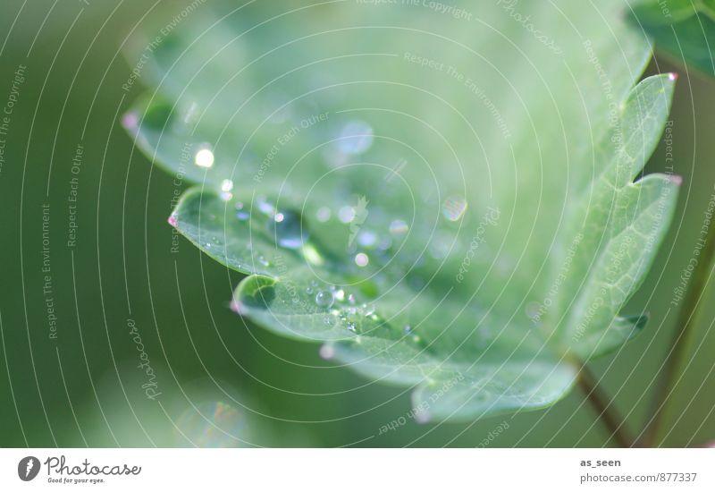Blattgeglitzer Natur Pflanze schön grün Wasser Sommer Umwelt Leben Gesundheit Garten glänzend Regen Wachstum elegant ästhetisch
