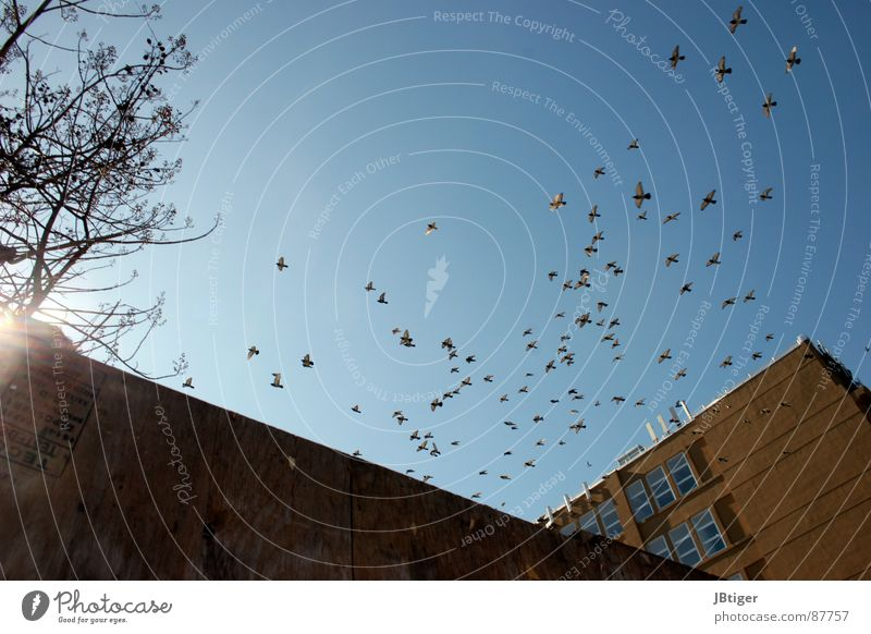 Freiheit Freude Freiheit Graffiti Wärme Luft Vogel fliegen Niveau Fabrik Flügel Blauer Himmel