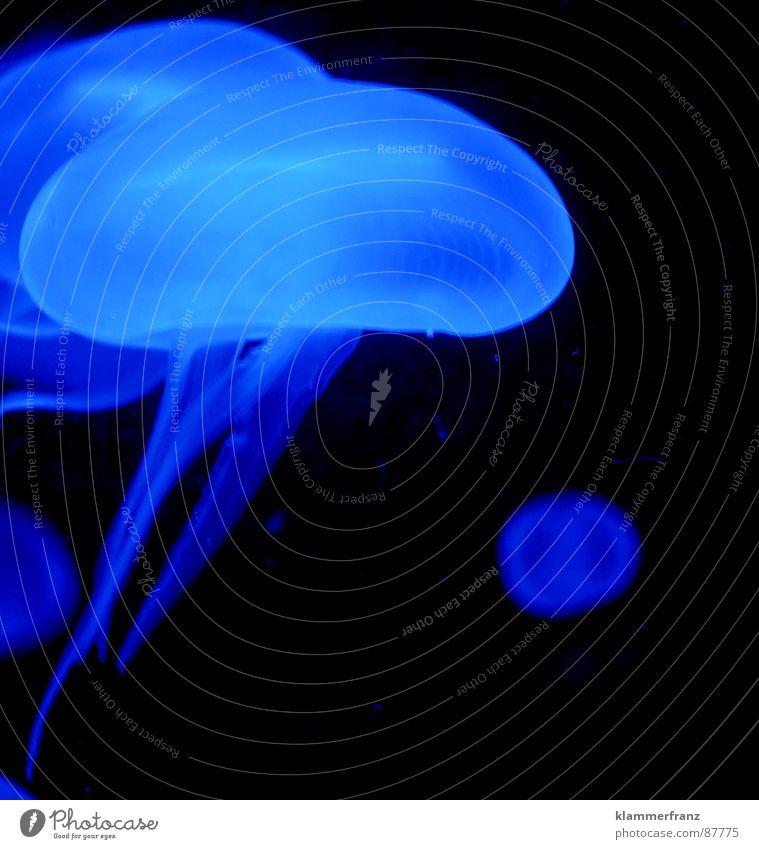 Ein Hauch von blau 5 Wasser Meer schwarz ruhig dunkel oben geschlossen fliegen Unendlichkeit Schmerz brennen Schweben leicht Leichtigkeit Druck Qualle