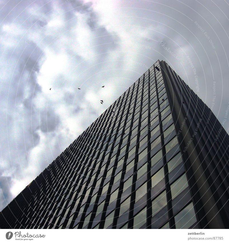 Vögel Wolken Berlin Regen Vogel Glas Fassade Hochhaus Duft Fensterscheibe Taube Zielscheibe Klimawandel blind Adler Krähe Rabenvögel