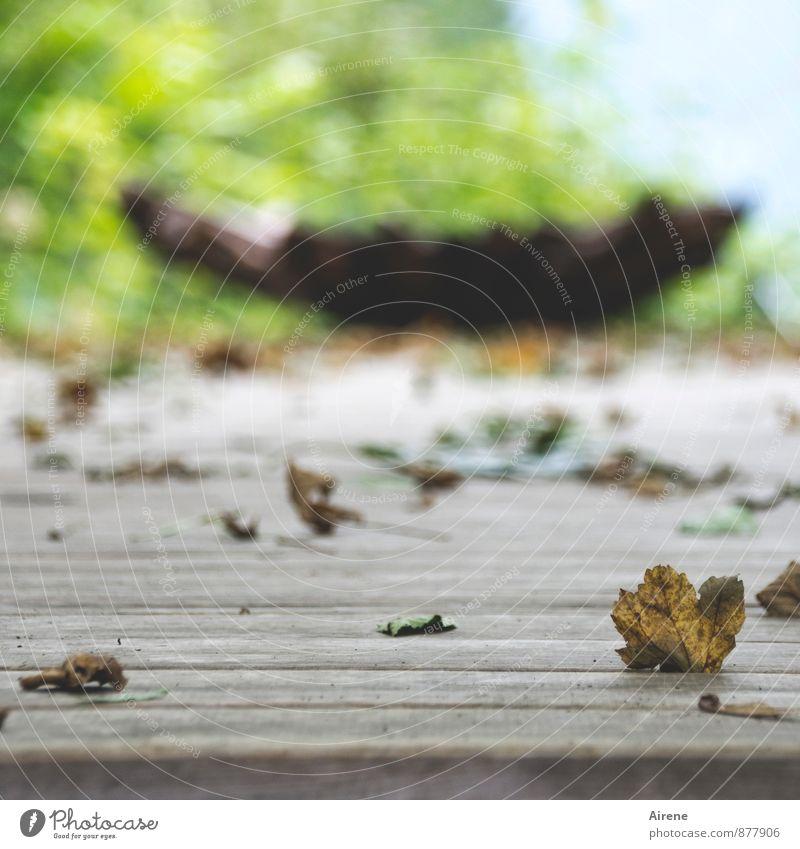 Meditation Wellness harmonisch Erholung ruhig Yoga Herbst Blatt Herbstlaub Park braun gelb grün Zufriedenheit still nachdenklich kontemplativ kraftort Farbfoto
